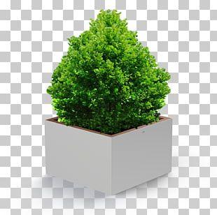 Flowerpot Houseplant Ornamental Plant Tree PNG