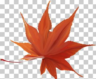 Japanese Maple Autumn Leaf Color Maple Leaf Red Maple PNG