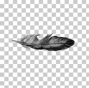 Drawing Feather Line Art PNG