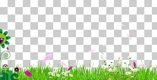 Meadow Fundal PNG