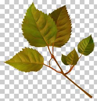 Leaf Flower Garden Roses Plant Stem PNG