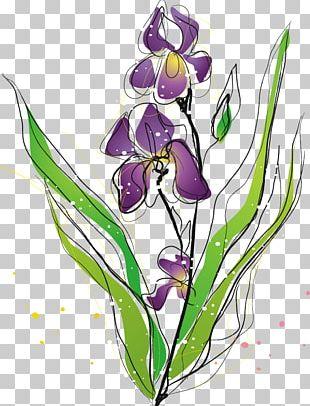Purple Irises Moth Orchids Plant PNG