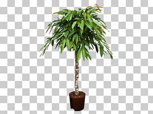 Houseplant Arecaceae Weeping Fig Tree Areca Palm PNG