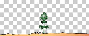 Fir Spruce Christmas Tree Biome PNG
