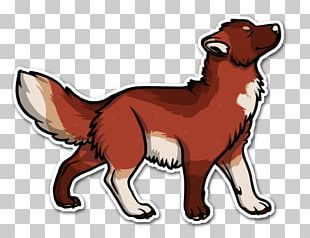 Dog Breed Red Fox Snout PNG