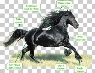 Stallion Friesian Horse Mustang Arabian Horse Bridle PNG