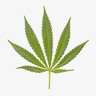 Marijuana Closeup PNG