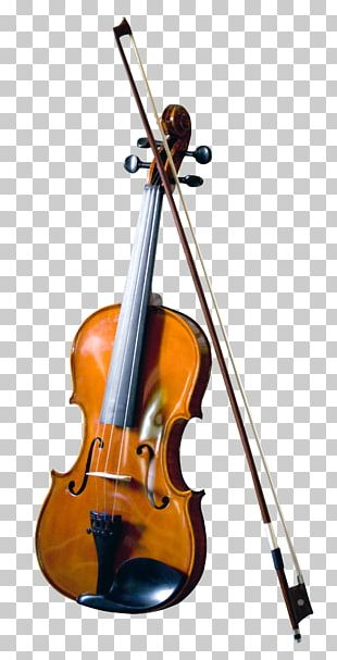 Bass Violin Double Bass Musical Instrument PNG