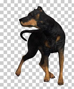 Dobermann Miniature Pinscher German Pinscher Manchester Terrier Black And Tan Terrier PNG