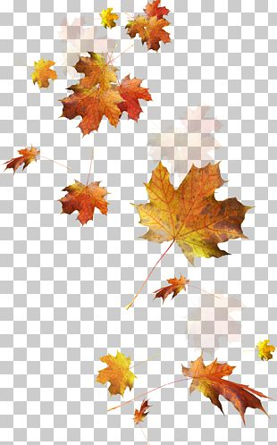 Autumn Leaves Autumn Leaf Color PNG