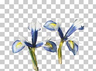 Orris Root Irises Cut Flowers PNG
