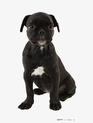 Pug S PNG