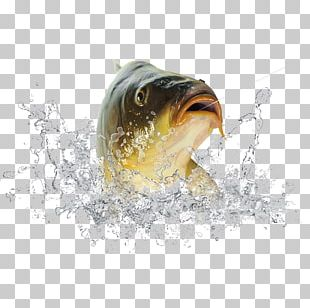 Fish Icon PNG