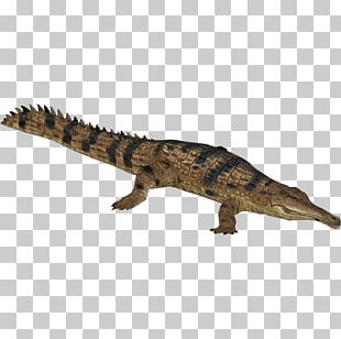 Zoo Tycoon 2 Nile Crocodile Crocodiles Slender-snouted Crocodile Gharial PNG