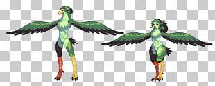 Macaw Parakeet Feather Beak Character PNG