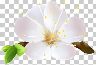 Flower Euclidean Common Daisy Plant PNG