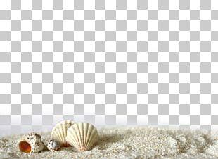 Beach Of La Concha Seashell Sand Light PNG