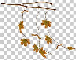 Leaf Autumn Leaves PNG