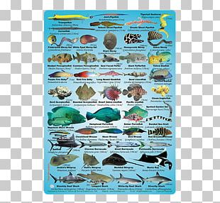 Coral Reef Fish Water PNG