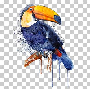 Watercolor Painting Art Toucan Parrot PNG