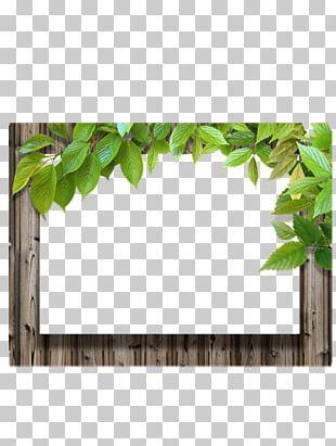 Frame Leaf Wood PNG