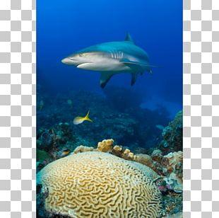 Coral Reef Fish Brain Coral Shark PNG