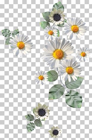 Flower Paper Drawing Icon PNG