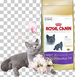 British Shorthair Cat Food Dog Siamese Cat Kittens & Puppies PNG