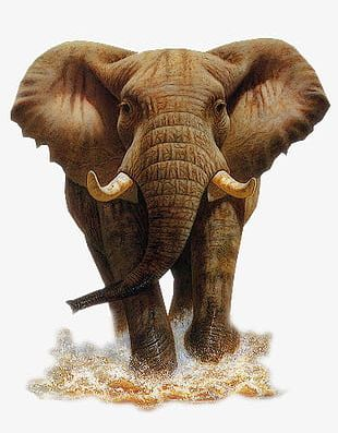 Elephant Mammoth PNG