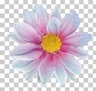 Raster Graphics Computer Graphics Flower PNG
