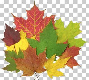 Autumn Leaf Color Chlorophyll Leaf Blowers PNG