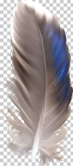 Feather Watercolor Painting Euclidean PNG
