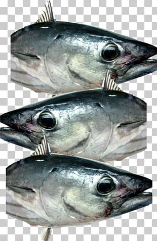 Mackerel Fish Products Oily Fish Sardine Anchovy PNG
