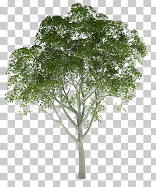 Architectural Rendering Tree Architecture 3D Rendering PNG