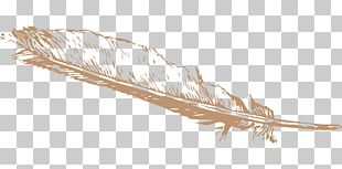 Eagle Feather Law Bird PNG
