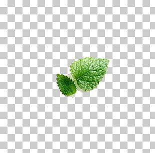 Mentha Spicata Leaf Euclidean PNG