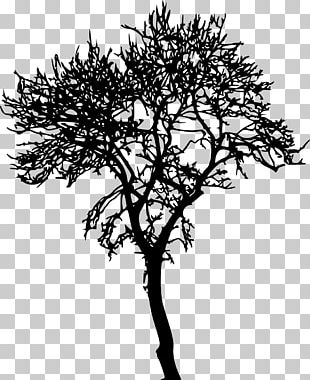 Tree Silhouette Woody Plant Branch PNG