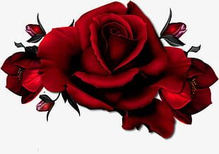 A Red Rose PNG
