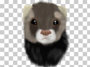 Ferret Fur Mink Whiskers Snout PNG
