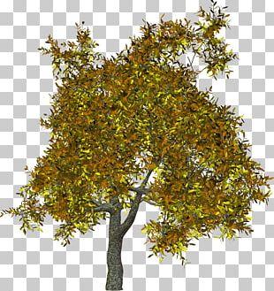 Plane Trees Branch Shrub PNG