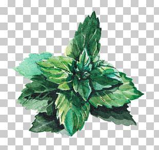 Water Mint Leaf Green Lemonade PNG