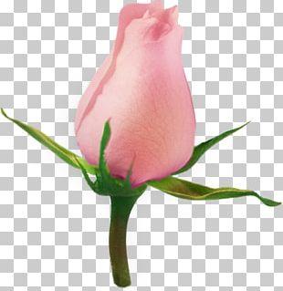 Garden Roses Flower PNG