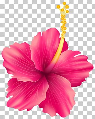 Flower Scalable Graphics PNG