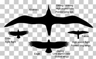 Bird Flight Bird Flight Wing Animal Locomotion PNG