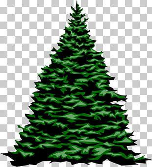 Christmas Tree Fir Evergreen PNG