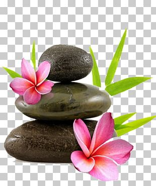 Rock Pebble Frangipani Flower Stock Photography PNG