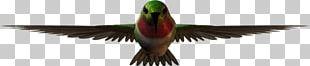 Bird Macaw Feather Vertebrate Beak PNG