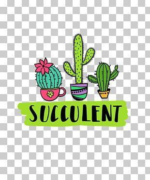 Cactaceae Succulent Plant If(we) Echeveria PNG