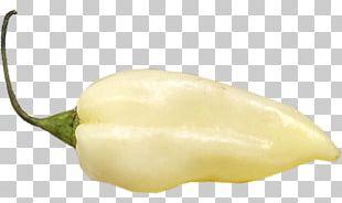 Habanero Chili Con Carne Fatalii Chili Pepper Bell Pepper PNG