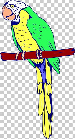 Amazon Parrot Bird Coloring Book Macaw PNG